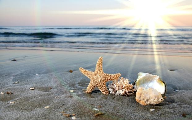 Conchas y estrella